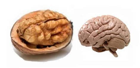 prevence na alzheimerovou chorobu